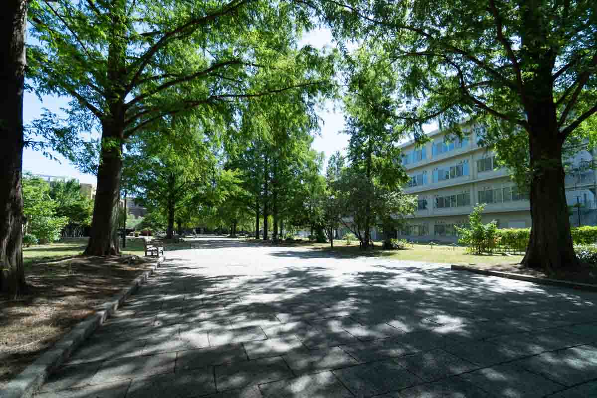 東千田公園の並木道