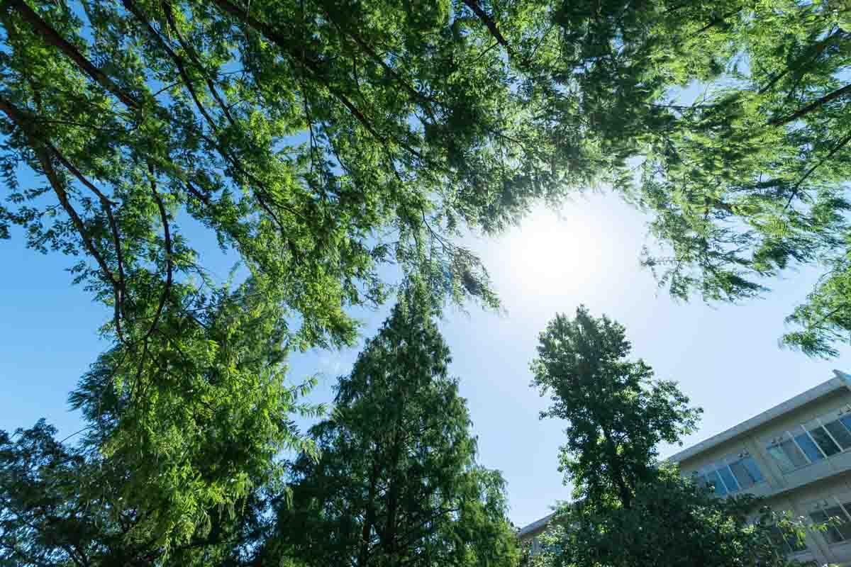 木の間から見える太陽